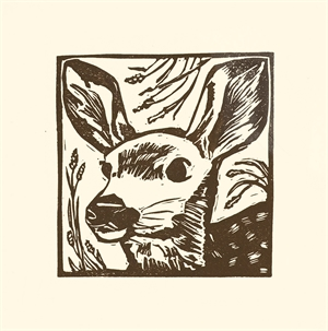 Mule Deer Fawn, 2020