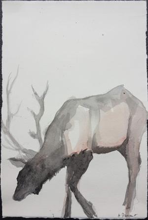 Animal Study II: Elk Grazing