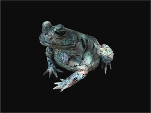 Large Frog