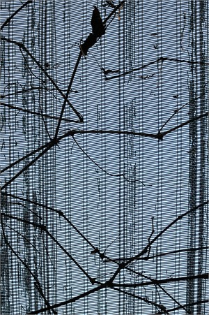 Greenhouse #14 (1/20)