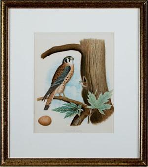 Sparrow Hawk (American artist), 1890