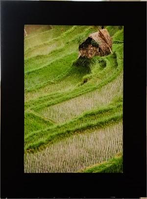 Rice Field, 2019