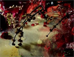 Velvet Veil I (3/6), 2006
