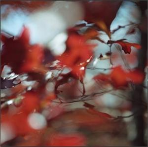 Georgia Oak in Wind by Kathryn Kolb