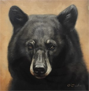 Black Bear on Golden (2/25), 2018