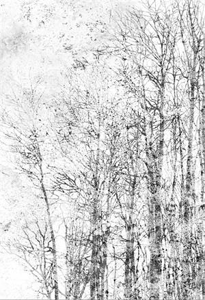 Woods Edge (Edition 10)