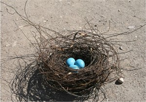 Nest - Large With Turquoise Eggs
