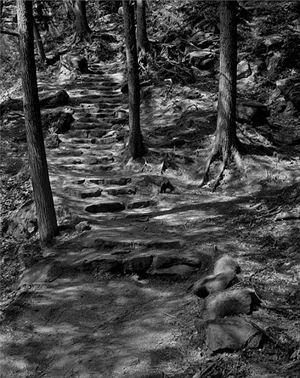 (#395) Stairs and Dappled Sunlight by Frank Hunter