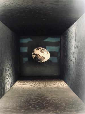 Quail Egg 34 (2/5), 2019