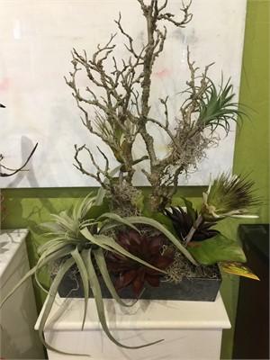 Air Faries - Aged Branch, Tillandsia, Protea,Aeonium #3, 2019