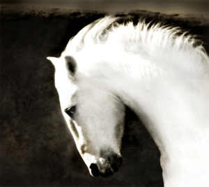 "Ghost Horse - Framed - 31"" x 34.5""  (32/200), 2020"