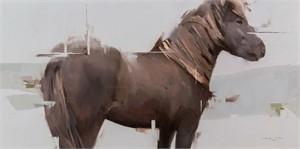 Icelandic Horse