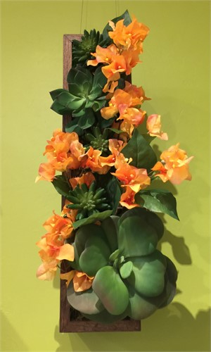 Pure Vida - Hanging vertical wall box planted with Bougainvillea, Aeonium and  Echeverias., 2019