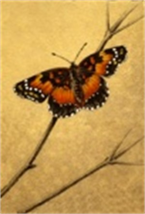 Bordered Patch_UF