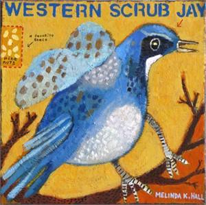 Western Scrub Jay with Pine Nuts