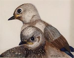 Bluebird Parents (/1), 2019