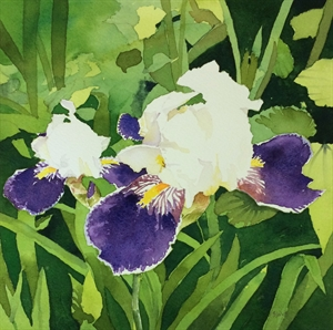 Garden Iris by Barbara Waterman-Peters