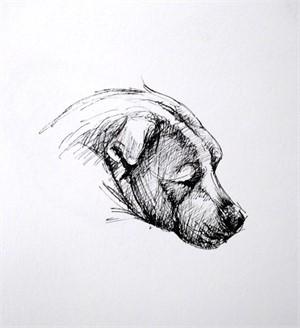 Dog Sketch I