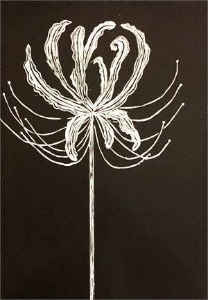 Spider Lily in Black