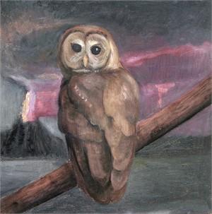 Barred Owl, 2018