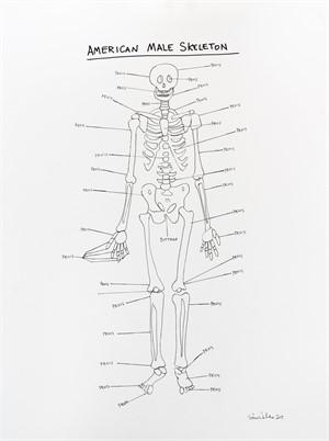 American Male Skeleton