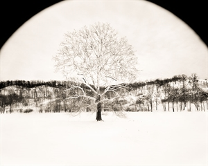 Tree In Winter (2/34) by Frank Hunter