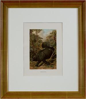 Rhinoceros, 1885