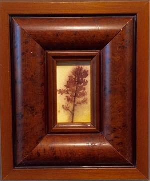 Tree #323