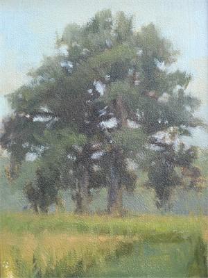 Oak Tree Field Study, 2018