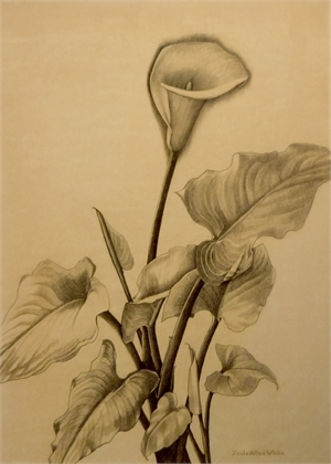 Calla Lilly , c. 1940