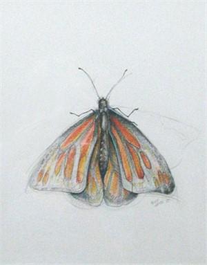 Monarch, 2003