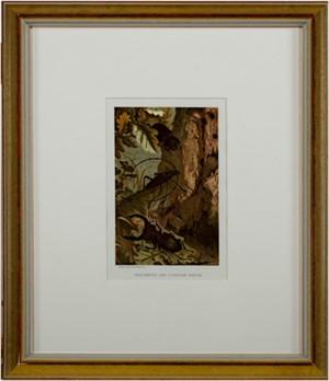 Stag-Beetle & Longicorn Beetle, 1885