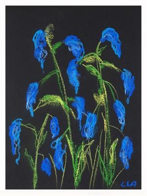 Carole's Garden: Bluebells