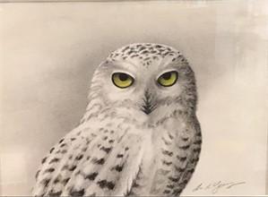 Grey Owl, 2019