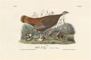 Wild Turkey - Female & Young No. 58, Pl. 288, 2008