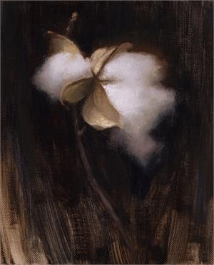 Cotton VI