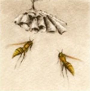 Paper Wasps_UF
