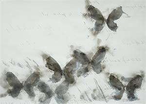 Smoke Butterflies