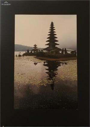 The Tree Island, 2019