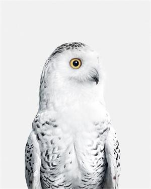 Snow Owl No. 1 (1/10)