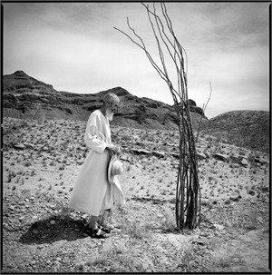 Monk & Ocotillo by Kevin Greenblat