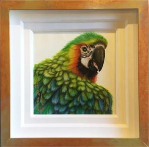 Macaw , 11/12/16