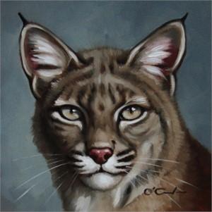 Bobcat Portrait, 2019