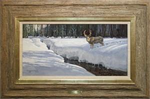 Mule Deer Buck, 2019