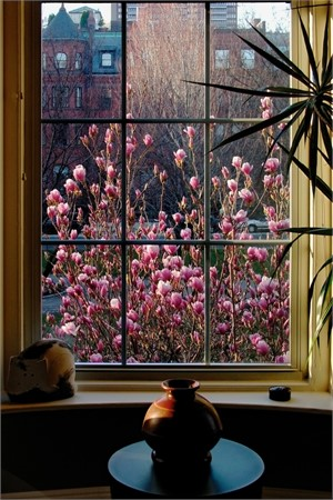 Magnolia Morning