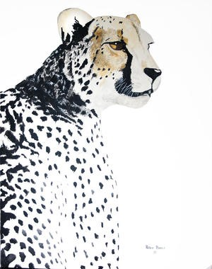 Cheetah Portrait, 2018