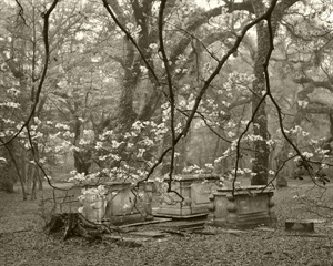 Dogwoods and Graves in Sheldon Churchyard by Frank Hunter