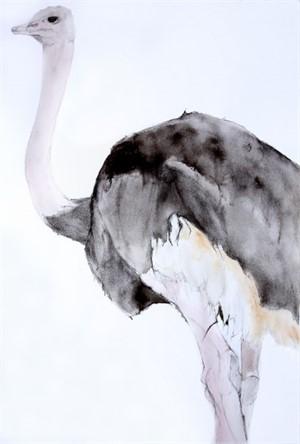 Medium Male Ostrich #1, 2015