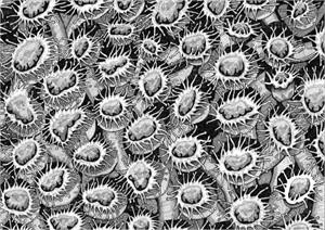 Coral Polyps 3, 2015