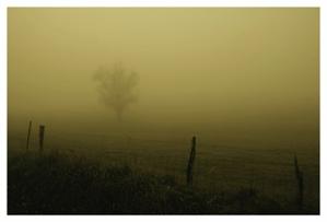 Fog Trees Seven, Smith Lake, 2020